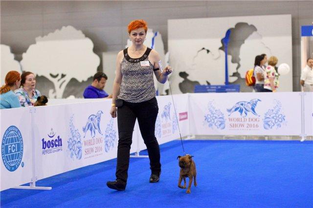 Мы посетили World Dog Show 2016