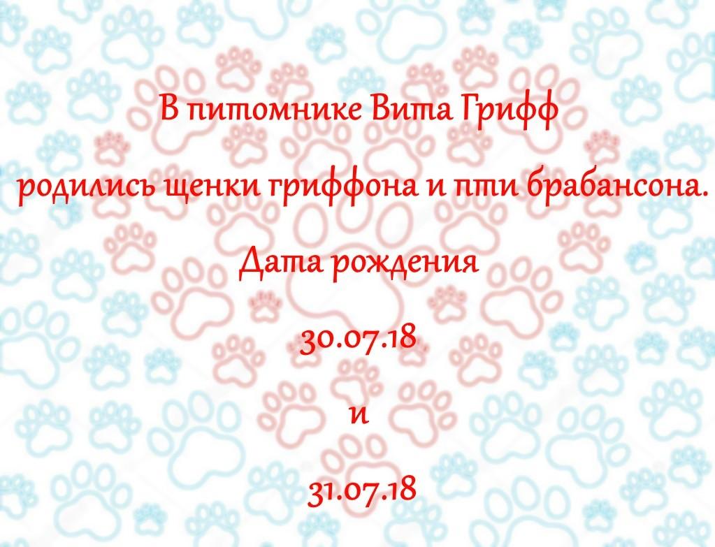 (Русский) У нас родились щенки брабансона и гриффона